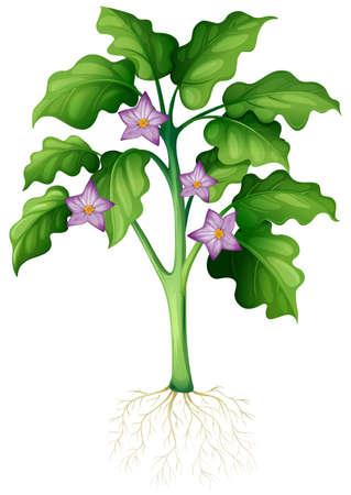 raices de plantas: flores púrpuras en el ejemplo de la planta