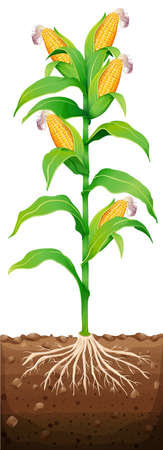 Corn on the tree illustration