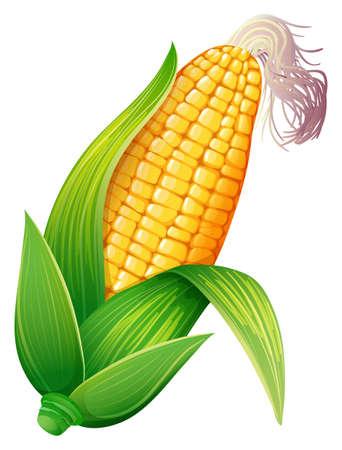 新鮮なトウモロコシ穂軸の図  イラスト・ベクター素材
