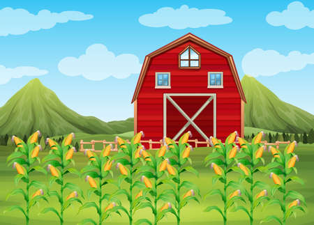 トウモロコシと赤の納屋図のフィールド