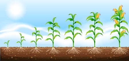 elote caricatura: El maíz que crece de la ilustración subterránea