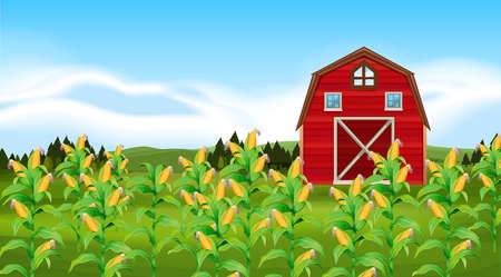 corn field: Scene with corn field illustration Illustration