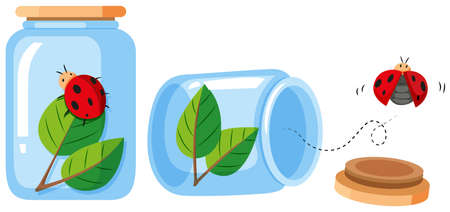 out: Ladybugs in the bottle and out the bottle illustration Illustration