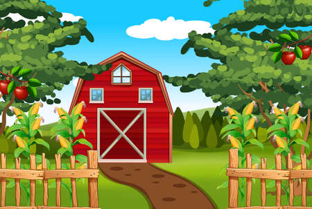 barns: Corn and apples on the farm illustration Illustration