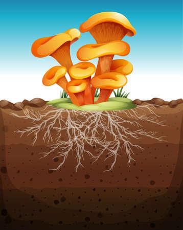 terreno: Funghi nella figura terra