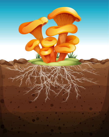 root vegetables: Mushroom in the ground illustration
