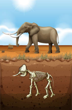 fossil: Elephant on the ground and fossil underground illustration Illustration