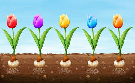 ground: Different color tulip on the ground illustration