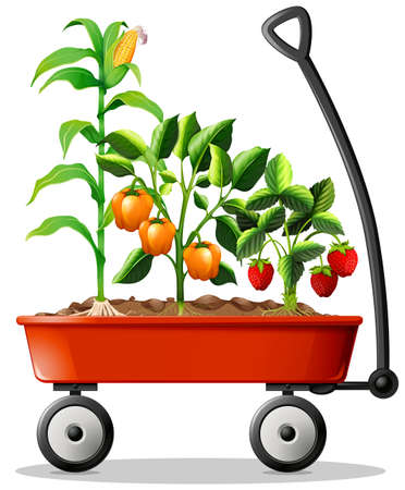 vegetable garden: Fresh vegetables and fruits in the cart illustration