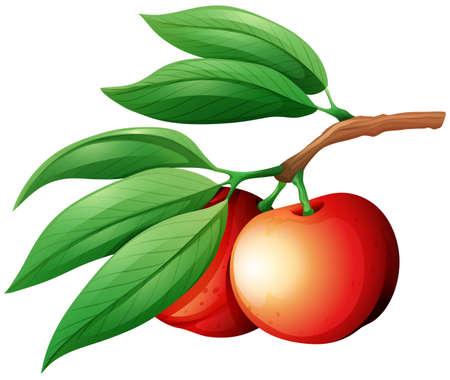 nectarine: Fresg nectarine on the branch illustration