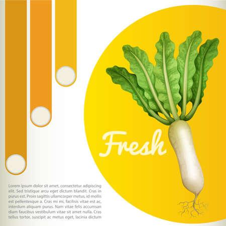 radish: White radish with text illustration Illustration