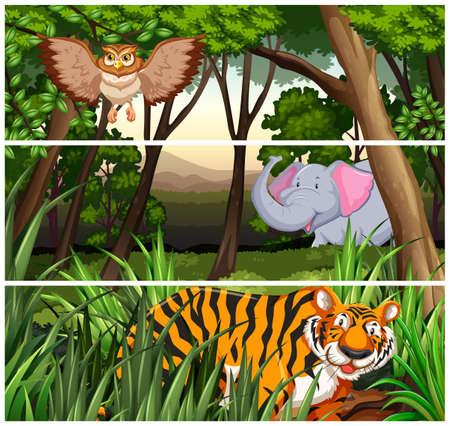 wildlife: Wildlife in the jungle illustration
