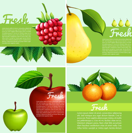rasberry: Infographic design with fresh fruits illustration