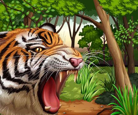 selva caricatura: Tigre que ruge en la selva ilustración Vectores