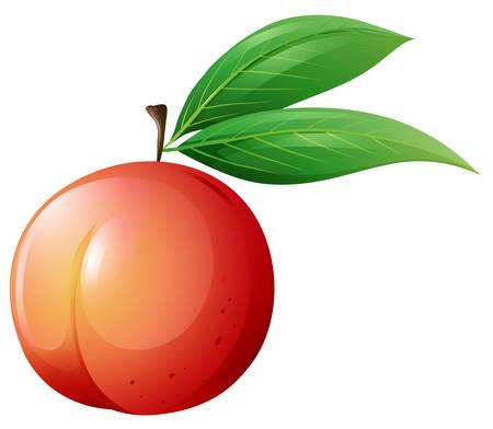 Fresh peach with leaves illustration 版權商用圖片 - 49391434
