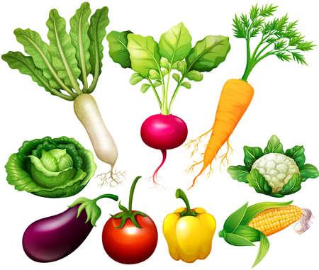 Alle soorten groenten illustratie