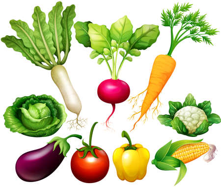 rad: All kind of vegetables illustration