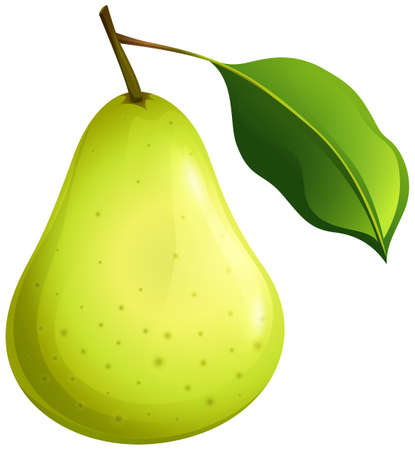 fruit illustration: Green pear with leaf illustration