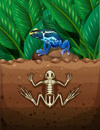 grounds: Frog on the ground and fosil underground illustration