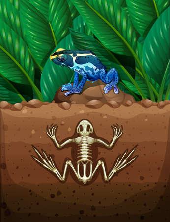 terreno: Rana a terra e fosil illustrazione sotterraneo