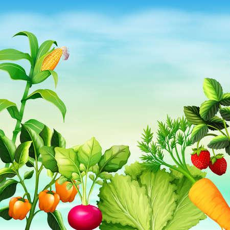 Many types of vegetables illustration Illustration
