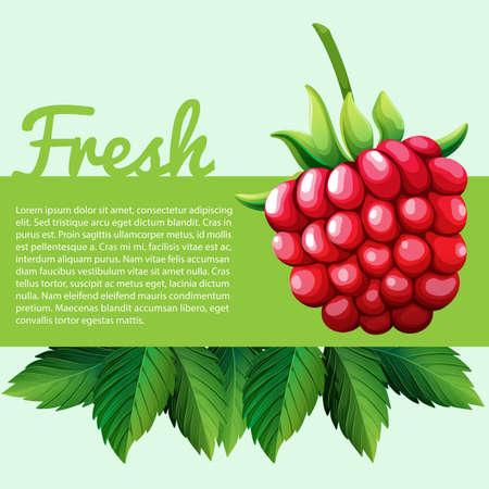 rasberry: Fresh rasberry with text illustration Illustration