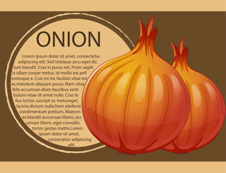 onions: Infographic design with fresh onions illustration Illustration