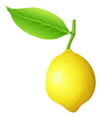 close: Fresh lemon with stem and leaf illustration