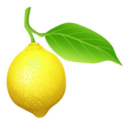 close up food: Fresh lemon with leaf illustration