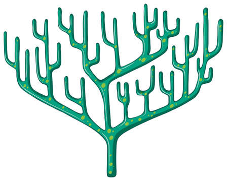 reef: Single coral reef on white illustration