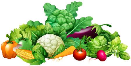 verduras verdes: Diferentes tipos de verduras ilustración