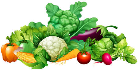 Different kind of vegetables illustration Zdjęcie Seryjne - 50176546