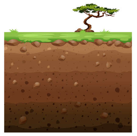 Single tree on surface and underground scene illustration  イラスト・ベクター素材