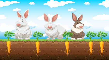 wild living: Three rabbits in the carrot farm illustration