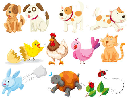 cat and dog: Different kind of domestic animals illustration