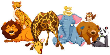zoo: Different kind of wild animlas illustration