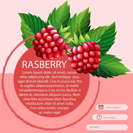 rasberry: Rasberry and text design illustration