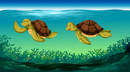 sea creature: Two turtles swimming under the sea illustration