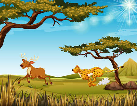 Cheethah chasing a deer in the field  illustration Illustration