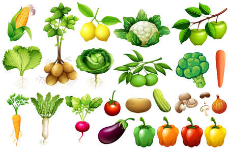 Various kind of vegetables illustration Çizim