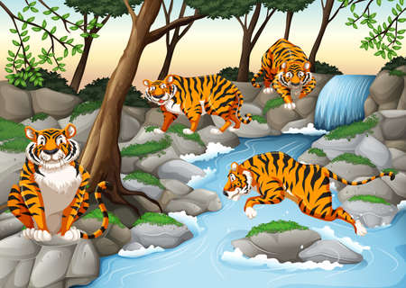 waterfall in forest: Four tigers living by the river illustration Illustration
