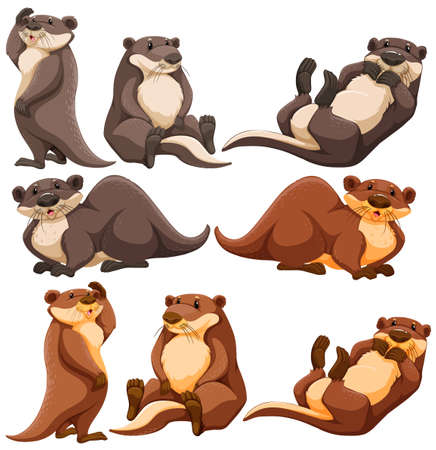 sleeping animals: Cute otters in different actions illustration Illustration