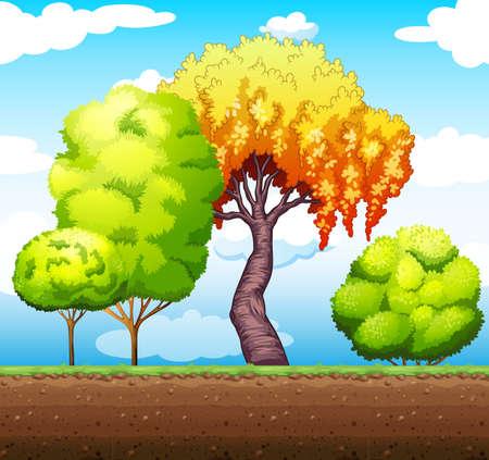 trees illustration: Trees in the park illustration