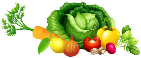 veggie: Various kind of vegetables illustration Illustration