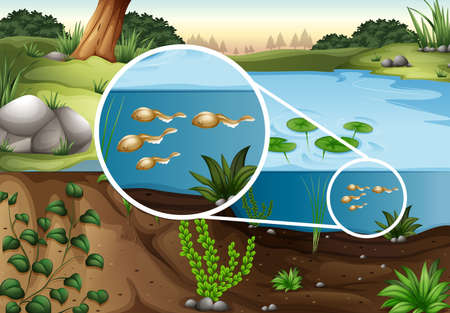 water ecosystem: Tadpoles swimming in the pond illustration