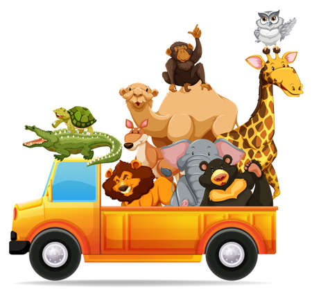pick up truck: Wild animals on pick up truck illustration Illustration