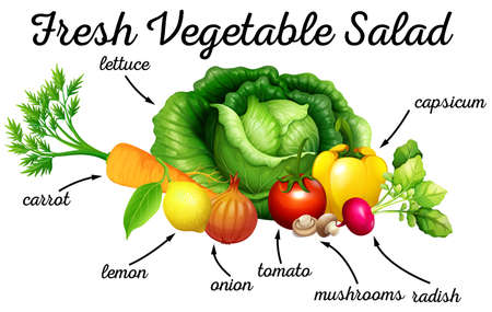 culinary arts: Various kind of vegetables for salad illustration