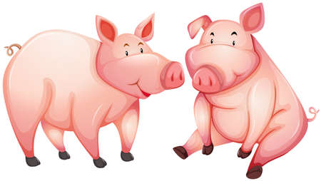 fat pigs: Two fat pigs with happy face illustration