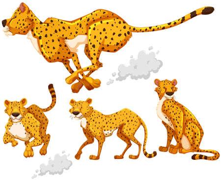 Cheetah w czterech różnych działań ilustracji