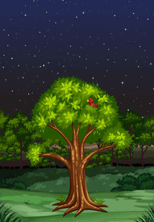 night time: Nature scene at night time illustration